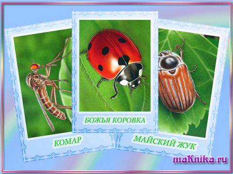 превью-насекомые